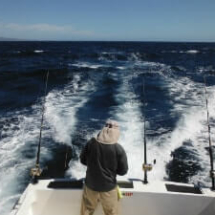 First Mate Robalo Back 300-min